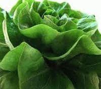 зелёные листовые овощи полезны для здоровья