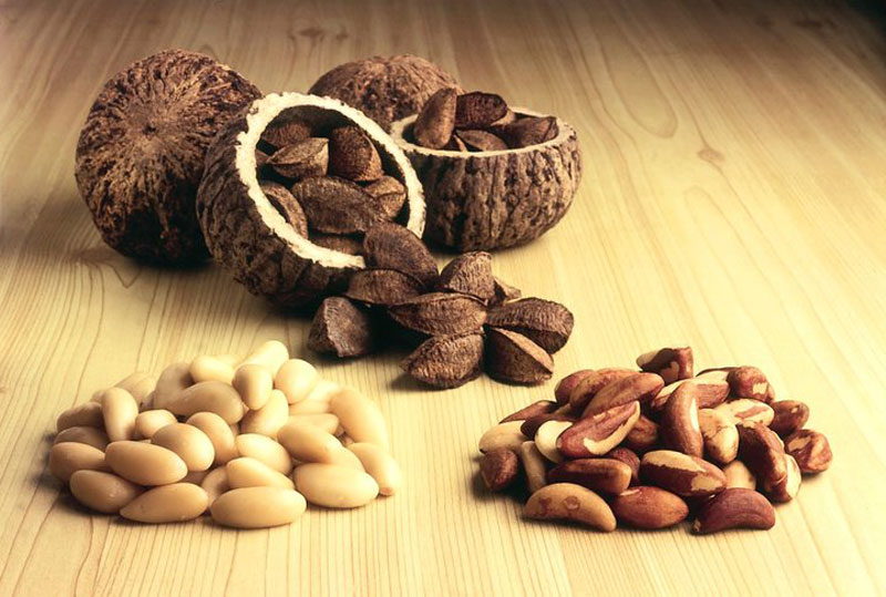 Бразильский орех: свойства и пищевая ценность